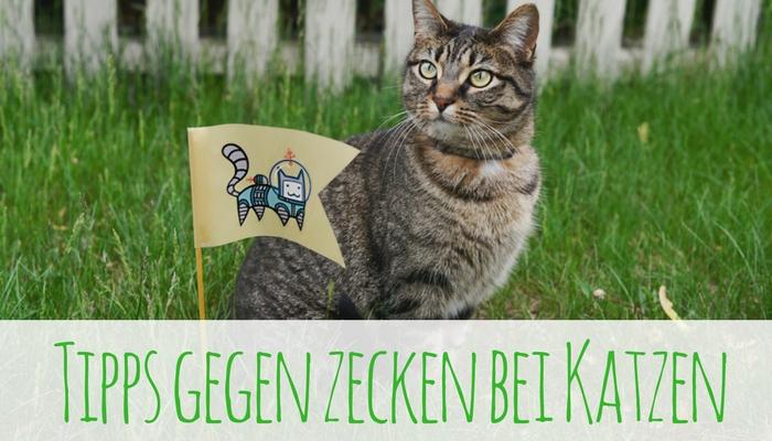 Katzen Und Zecken Sind Kein Gutes Gespann!