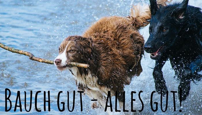 Gerrrrrrreizt…. Verdauungsprobleme Bei Deinem Hund