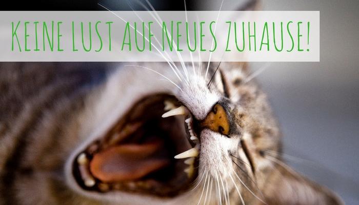 Umzug Mit Katzen – So Gewöhnt Sich Deine Miez Schnell An Ihre Neue Umgebung